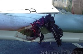 Jet Aircraft vs. Bird
