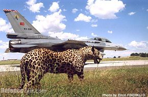 Turkish F-16 & Tiger