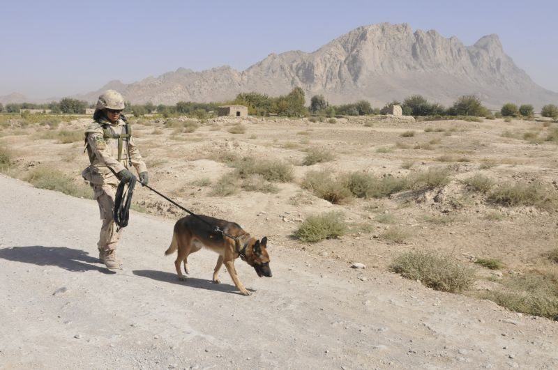 New 'breed' of US Army dog handlers