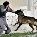 Israel army admits using dogs against Palestinians