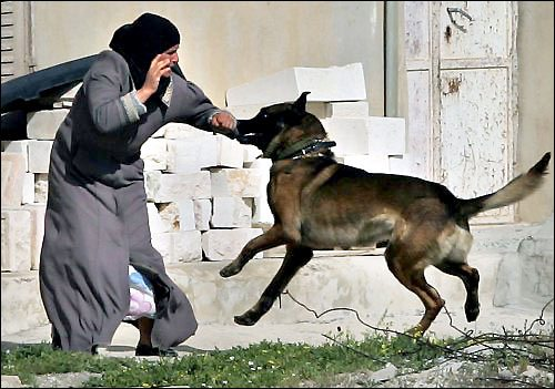 Israel army admits using dogs against ...