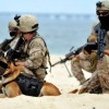 navy_seals-dog