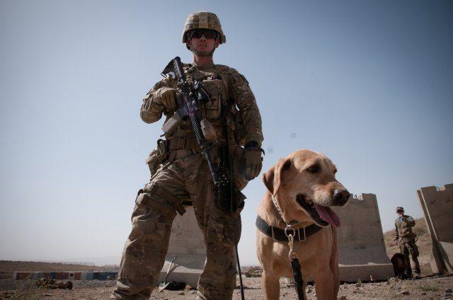 K-9 teams help IED fight in Afghanista...