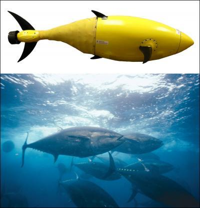 Robotic tuna is built by Homeland Secu...